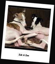 Zak and Zoe