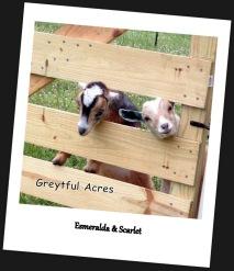 Esmeralda and scarlet peeking through gate-001