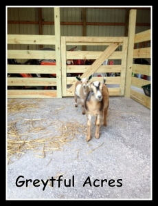 esmeralda and scarlet in goat pen