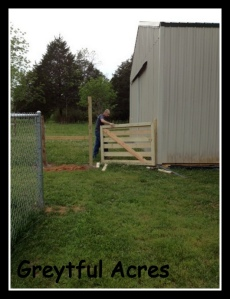 Gate being installed on near side of fence-001