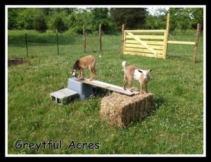 pasture playground