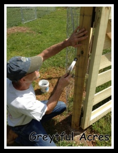 pounding the staples in the start of the fence