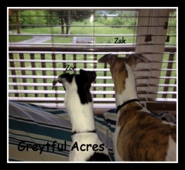 Zak and Zoe looking out the window at deer-001