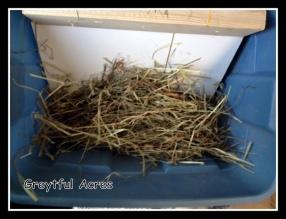 inside hay feeder