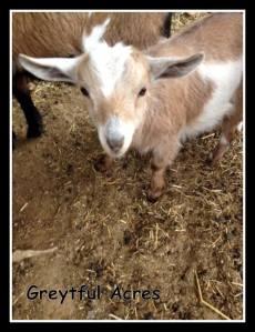 Scarlet at Jolly Beggar Farms-001